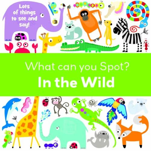 What Can You Spot? In the Wild board book